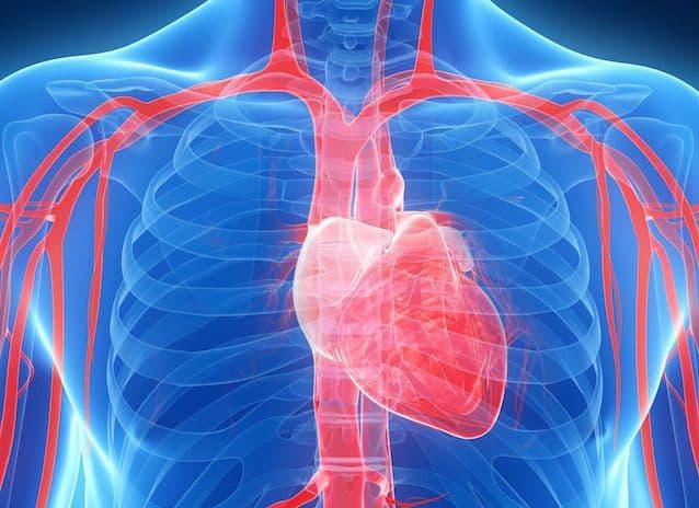 Cómo-funciona-el-aparato-circulatorio
