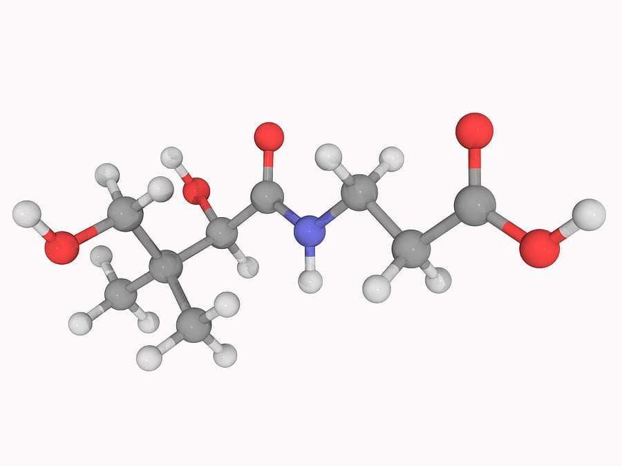 ácido-pantoténico