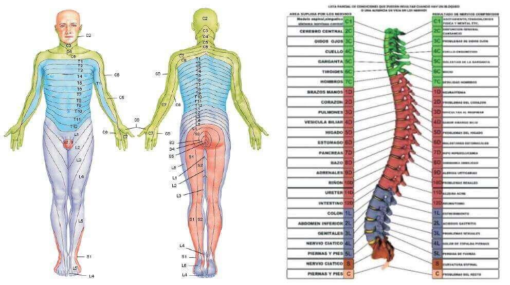 dermalgias y columna