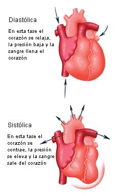 fases-cardíacas