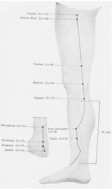 meridiano higado inferior