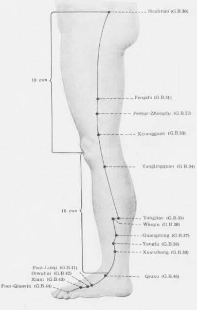 meridiano vesicula pierna
