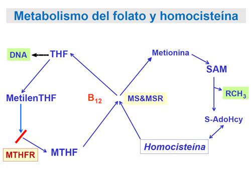 metilfolato