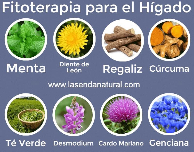 plantas para el hígado
