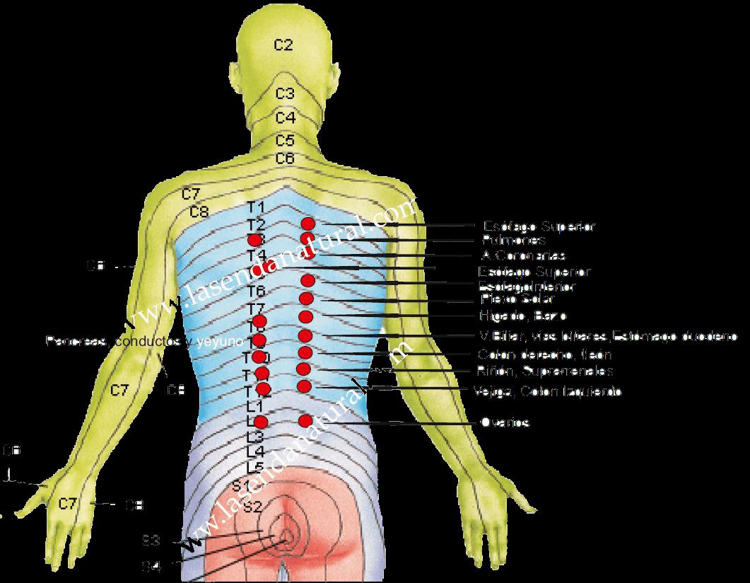 dermalgias posteriores