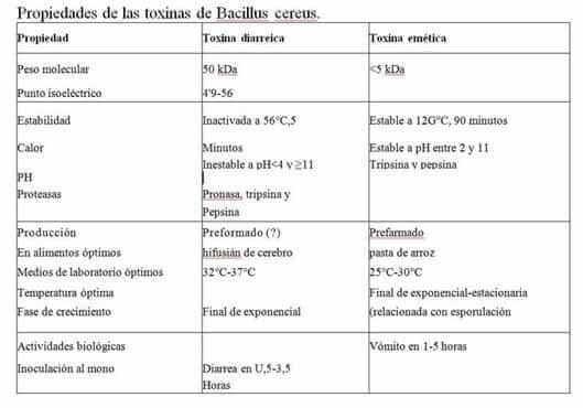 cuadro clinico por bacillus cereus