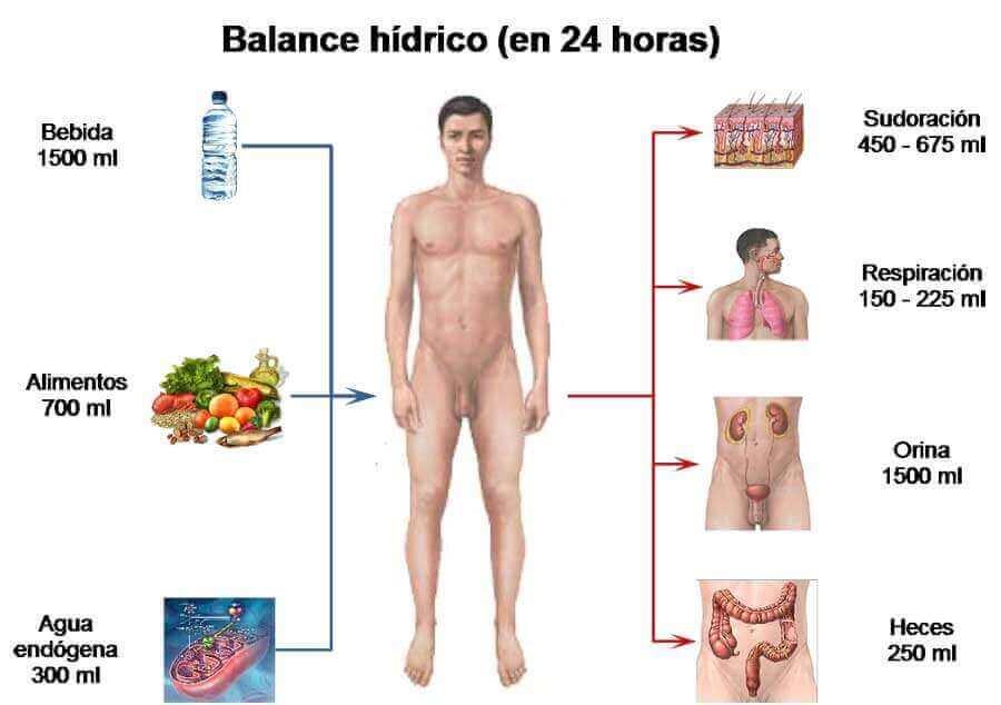 balance_hidrico en 24 horas