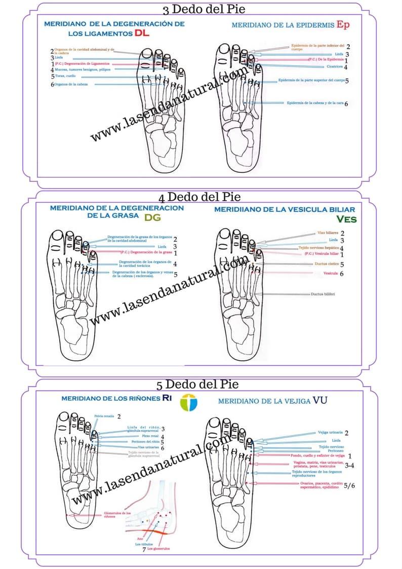 Electroacupuntura-de-Voll-dedos-del-pie-1