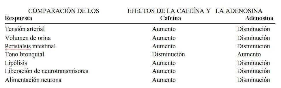 cafeína y adenosina