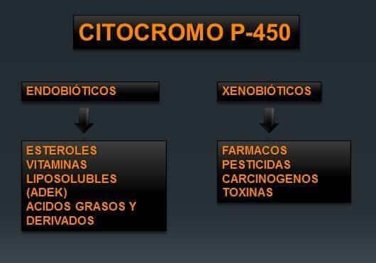 citocromoP450