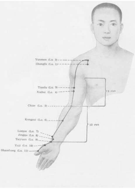 meridiano del pulmón
