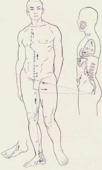 meridiano del riñón