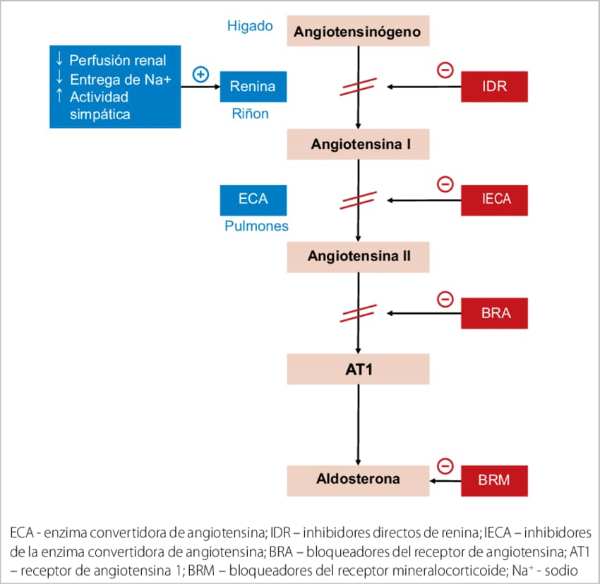 renina-angiotensina